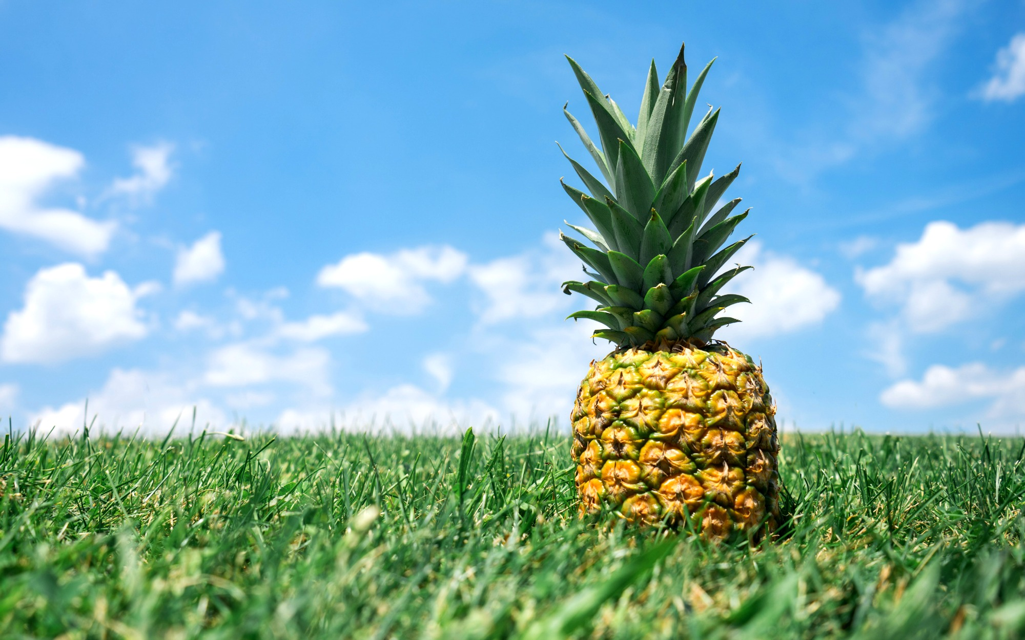 Photo credit: Pineapples.io / Unsplash